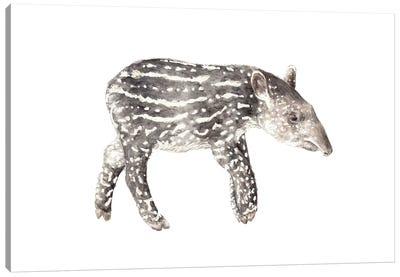 Tapir Calf Canvas Art Print