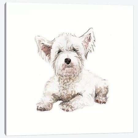 West Highland White Terrier Puppy Canvas Print #RGF92} by Wandering Laur Canvas Art Print