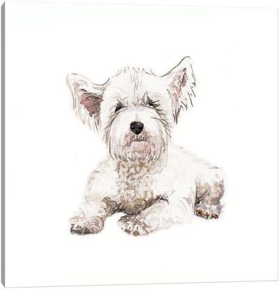 West Highland White Terrier Puppy Canvas Art Print