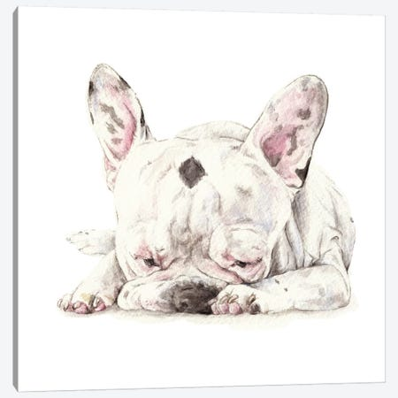 Spotted French Bulldog Canvas Print #RGF94} by Wandering Laur Canvas Artwork