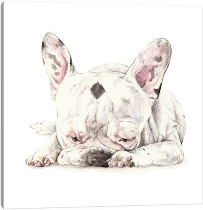 Spotted French Bulldog Canvas Art Print