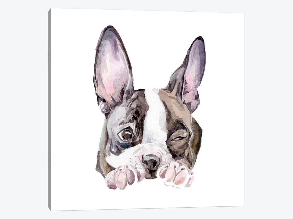 Winking Boston Terrier by Wandering Laur 1-piece Canvas Print