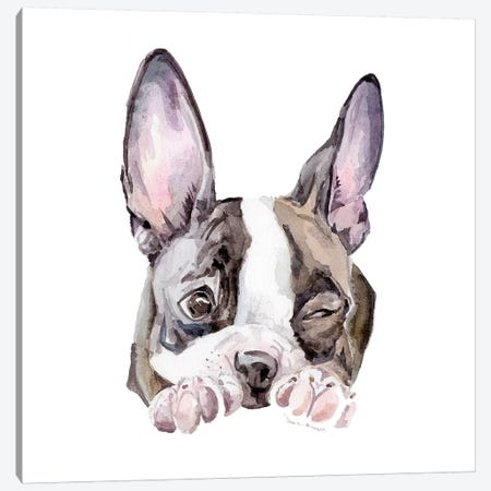 Winking Boston Terrier Canvas Print #RGF95} by Wandering Laur Canvas Wall Art