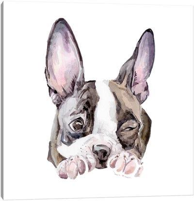 Winking Boston Terrier Canvas Art Print