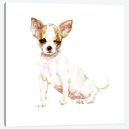 Winking White Chihuahua Canvas Print #RGF96} by Wandering Laur Canvas Art