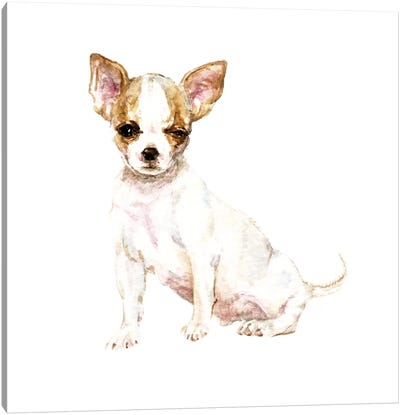 Winking White Chihuahua Canvas Art Print