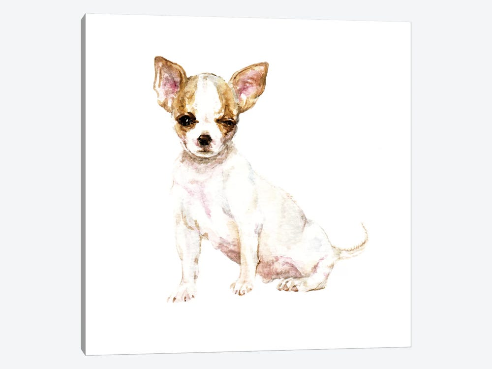 Winking White Chihuahua by Wandering Laur 1-piece Canvas Wall Art