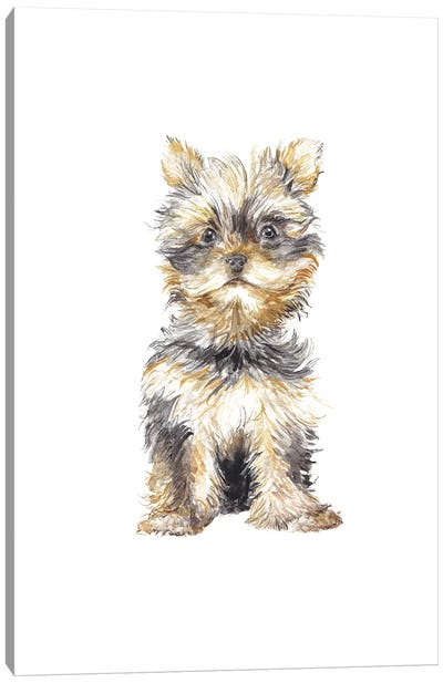 Yorkshire Terrier Canvas Art Print