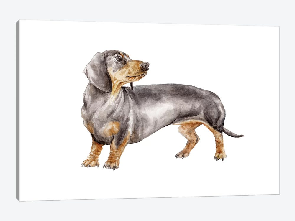 Black And Tan Dachshund by Wandering Laur 1-piece Art Print