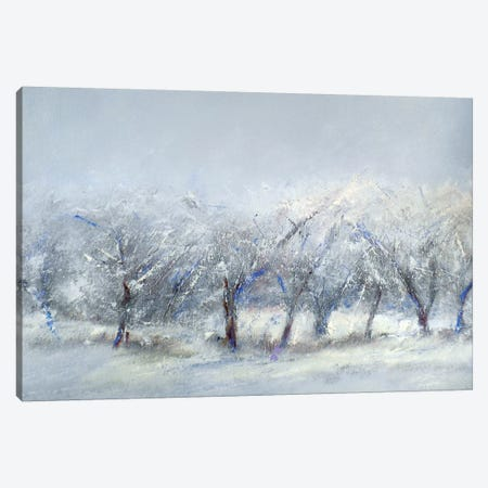 Winter Orchard Canvas Print #RGO41} by Rich Gombar Canvas Art Print