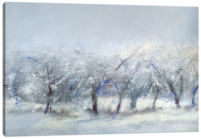 Winter Orchard Canvas Art Print