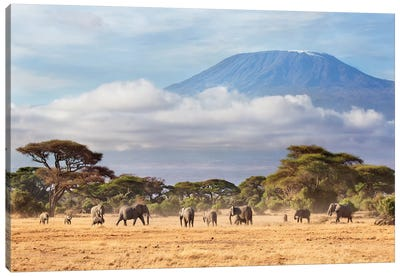 African Elephant Herd In Savanna, Mount Kilimanjaro, Amboseli National Park, Kenya Canvas Art Print