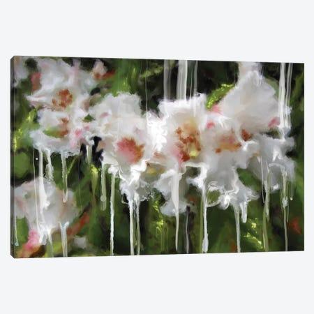 White Flor I Canvas Print #RGZ19} by Patricia Rodriguez Art Print