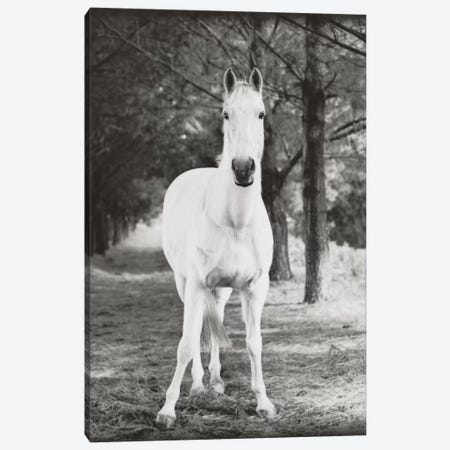 Little Milton Canvas Print #RHA114} by Rachael Hale Canvas Wall Art