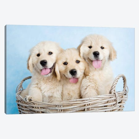 Buffy, Biskit, And Beau Canvas Print #RHA12} by Rachael Hale Canvas Wall Art