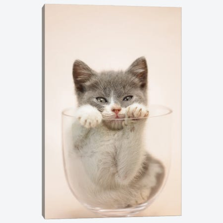 Kitten In Vase Canvas Print #RHA164} by Rachael Hale Canvas Print