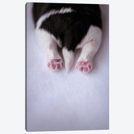 Lhasa Apso Puppy Canvas Print #RHA166} by Rachael Hale Canvas Print