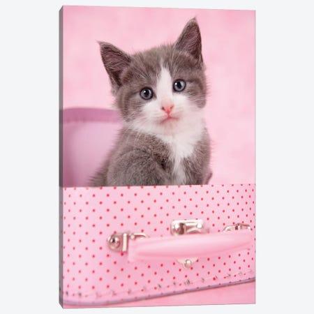 Pink Case Kittens Canvas Print #RHA172} by Rachael Hale Art Print
