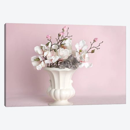 Lily Canvas Print #RHA49} by Rachael Hale Canvas Print