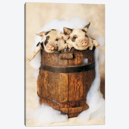 Bath Boys Canvas Print #RHA85} by Rachael Hale Canvas Artwork