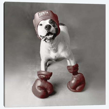 Boxing Dog Canvas Print #RHA9} by Rachael Hale Canvas Artwork