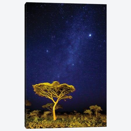 Africa. Tanzania. The Milky Way Illuminate The Night Sky at Ndutu in Serengeti National Park. 3-Piece Canvas #RHB15} by Ralph H. Bendjebar Canvas Wall Art