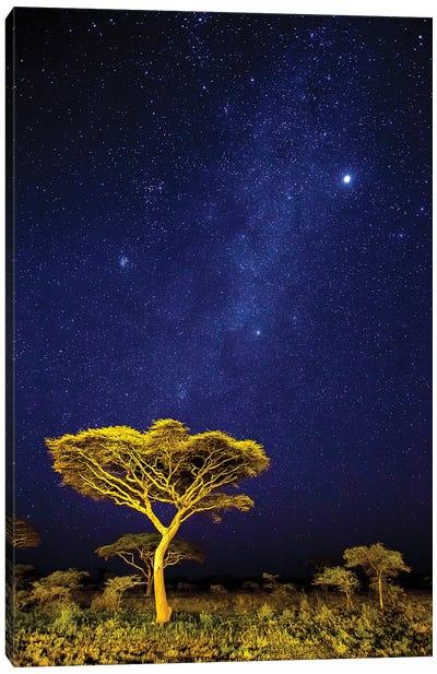 Africa. Tanzania. The Milky Way Illuminate The Night Sky at Ndutu in Serengeti National Park. Canvas Art Print