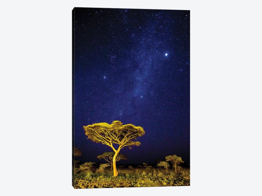 Africa. Tanzania. The Milky Way Illuminate The Night Sky at Ndutu in Serengeti National Park. by Ralph H. Bendjebar 1-piece Canvas Art Print