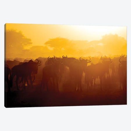 Africa. Tanzania. Wildebeest during the Migration, Serengeti National Park. Canvas Print #RHB17} by Ralph H. Bendjebar Canvas Artwork