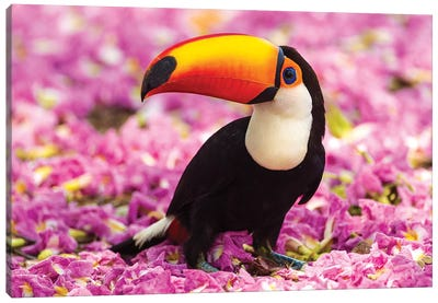 Brazil. Toco Toucan in the Pantanal II Canvas Art Print