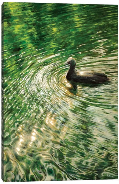 Coot Canvas Art Print