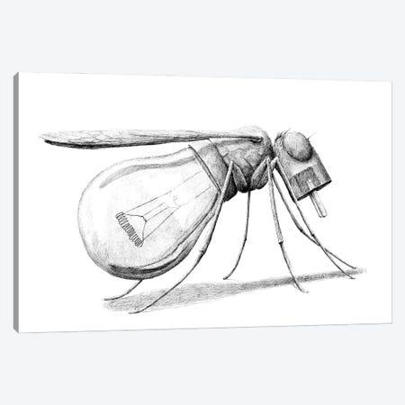 Mosquito Canvas Print #RHK17} by Redmer Hoekstra Canvas Art Print