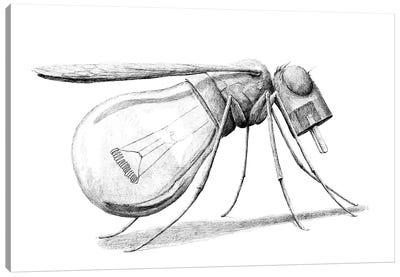 Mosquito Canvas Art Print