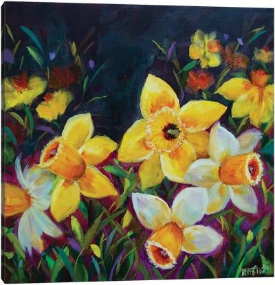 Midnight Kiss Daffodils Canvas Art Print