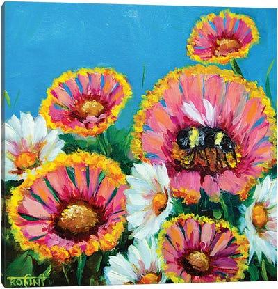 Summer Pink Gaillardias And The Busy Bee Canvas Art Print