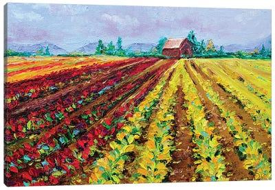 Skagit Valley Blooming Tulips Canvas Art Print