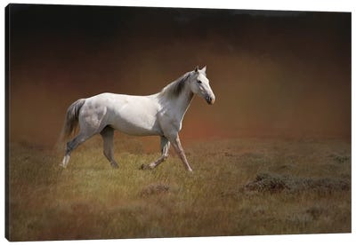White Horse Running Canvas Art Print
