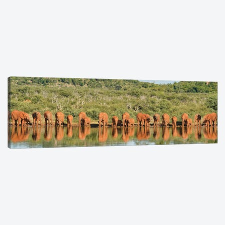 Africa Elephant Large Family Canvas Print #RHT106} by Rhonda Thompson Canvas Wall Art