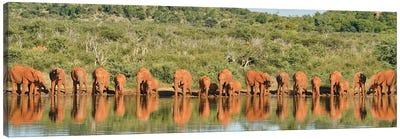 Africa Elephant Large Family Canvas Art Print