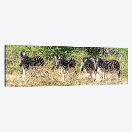 African 4 Zebras Canvas Print #RHT108} by Rhonda Thompson Canvas Art Print