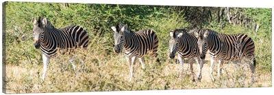 African 4 Zebras Canvas Art Print