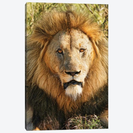 African Aging King Canvas Print #RHT110} by Rhonda Thompson Canvas Art