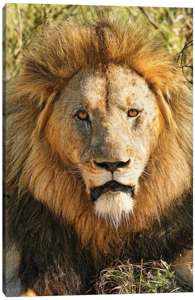 African Aging King Canvas Art Print