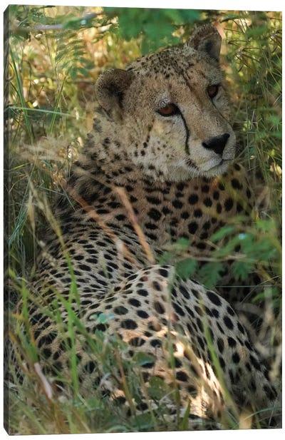 African Cheetah Canvas Art Print