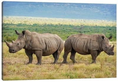 African Rhinoceros double Canvas Art Print
