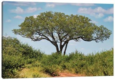 African View Canvas Art Print