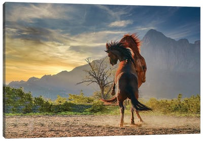 Playful Stallions Canvas Art Print