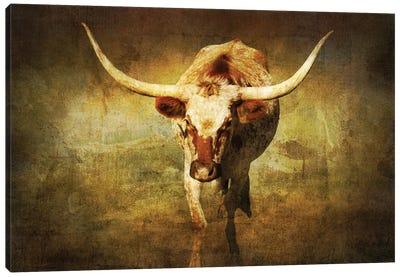 Steer 1 Canvas Art Print