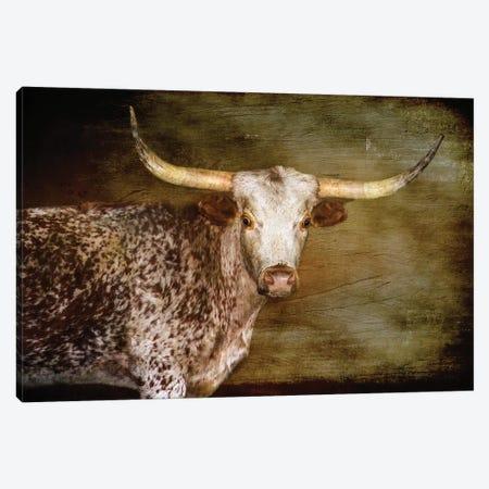 Steer 2 Canvas Print #RHT37} by Rhonda Thompson Canvas Artwork
