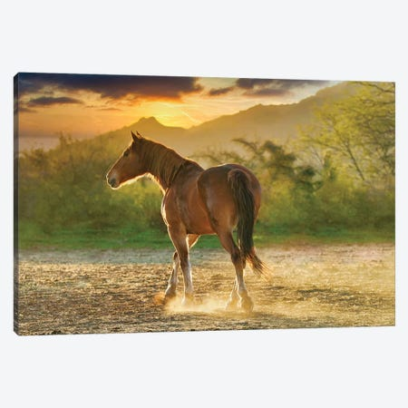 Sunset Pony Canvas Print #RHT40} by Rhonda Thompson Canvas Artwork